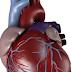 مقال علمي عن القلب يتكون من مقدمة وعرض وخاتمة
