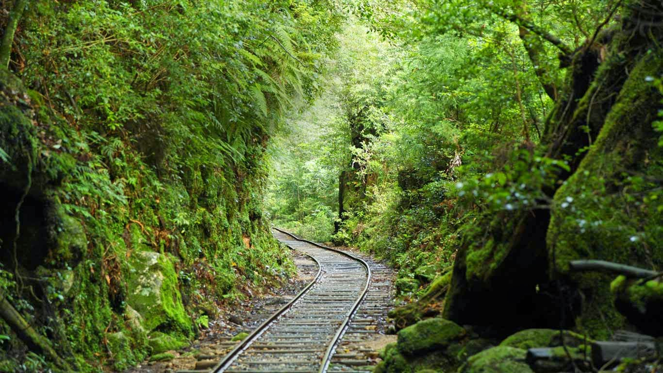 Railroad track through forest, Kagoshima Prefecture, Japan (© B.SCHMID/amanaimages/Corbis) 205