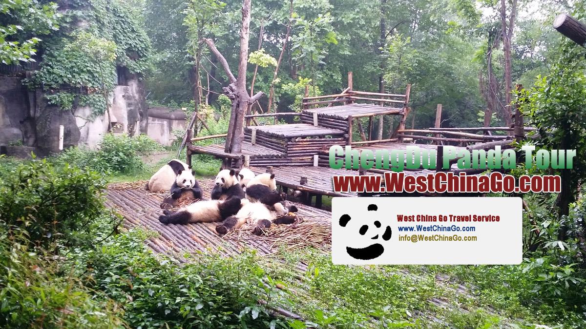 chengdu panda tour package
