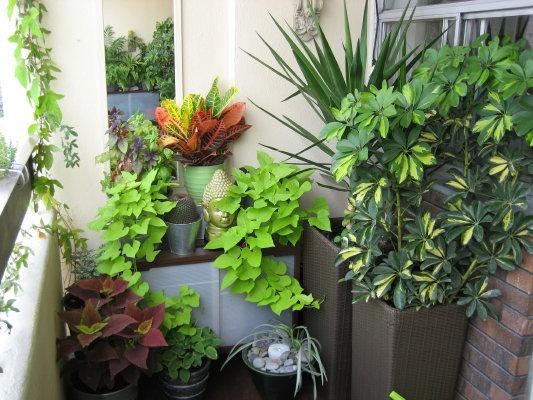 Jardim~ Ideias Para Jardim Em Apartamento