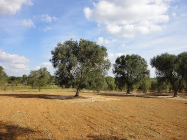 7.76 acres of flat land