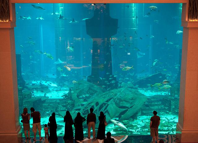 شاهد اكبر بالعالم Dubai-Aquarium-6.jpg