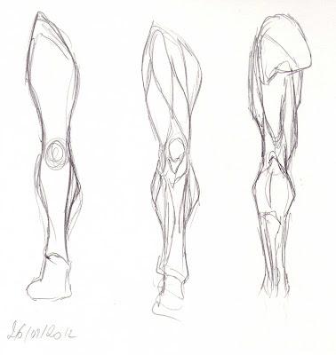 blog de claire matz croquis muscles du bras et de la jambe. Black Bedroom Furniture Sets. Home Design Ideas