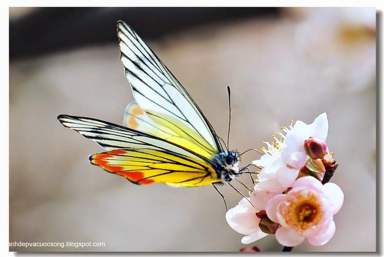 Con bướm xuân 6
