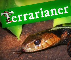 Das Terraristik-Blog