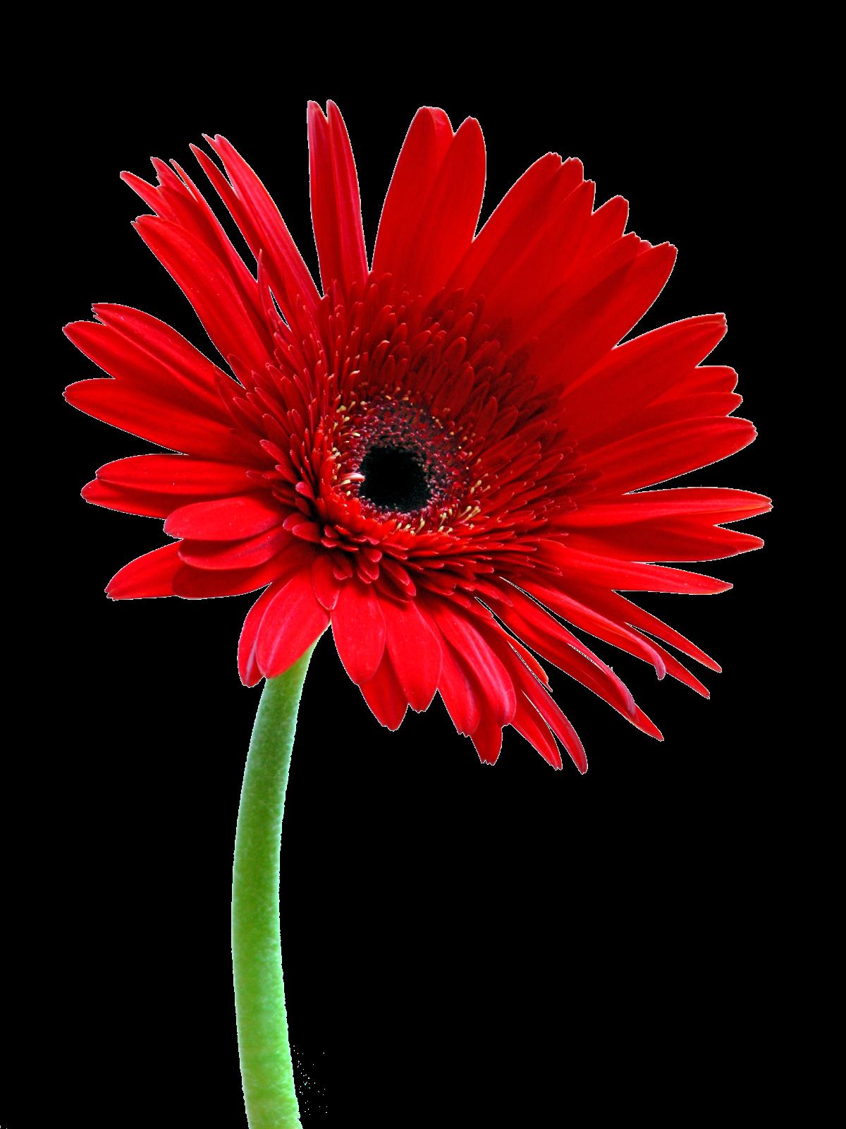 Jour de L'Extra-ordinaire.: Ma petite fleur rayonnante,