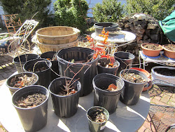 Getting the pots ready to plant this Spring