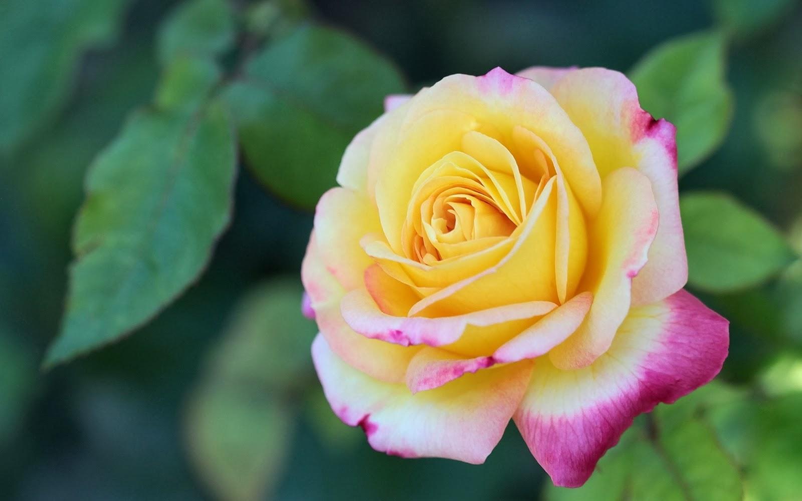 Imagenes hermosas de flores - Fotos Bonitas de Amor