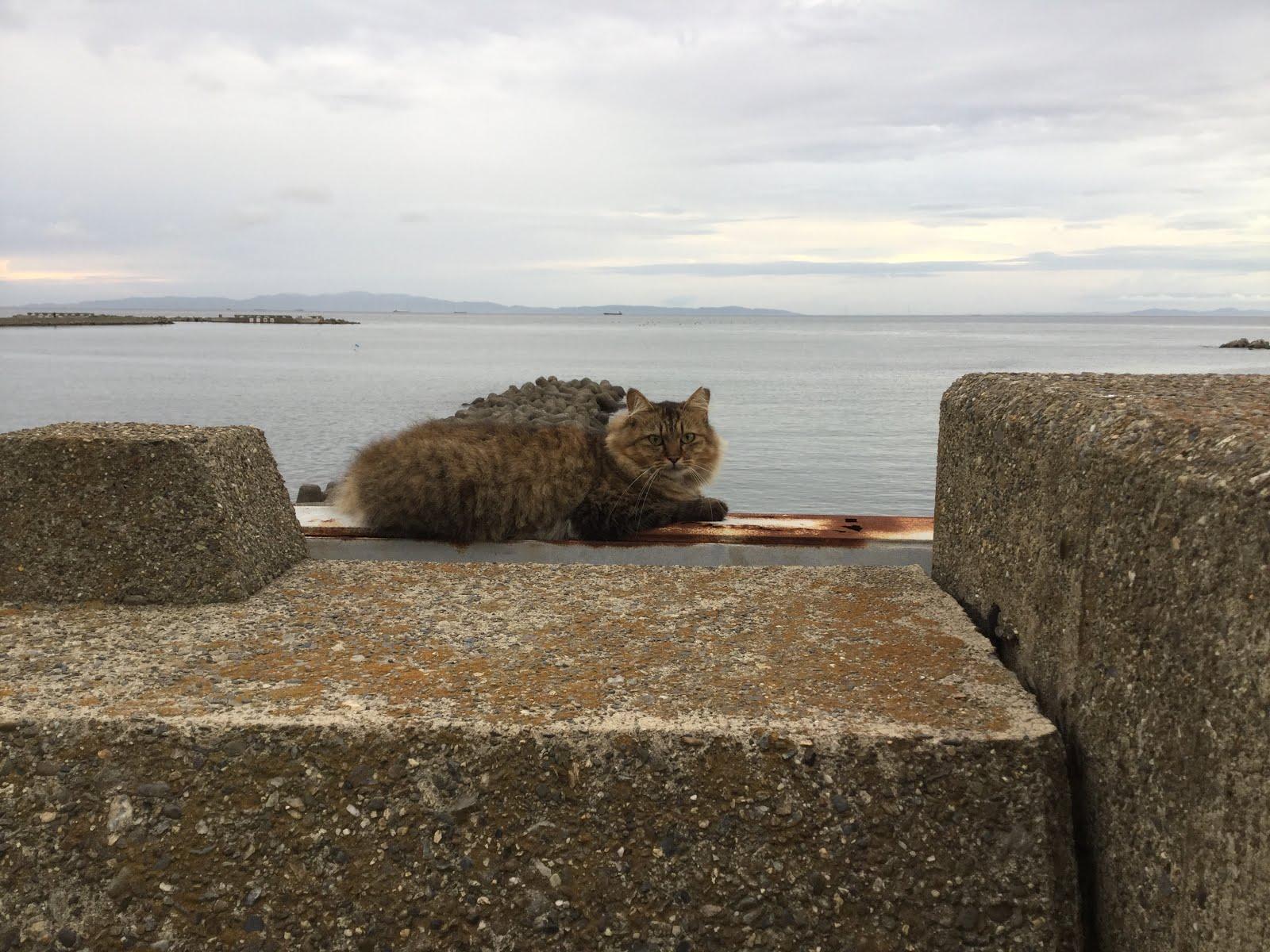 猫の居る道 器展