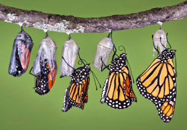 Viața înseamnă schimbare, creșterea este opțională