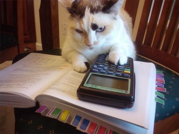 cat_with_calculator-600x450.jpg