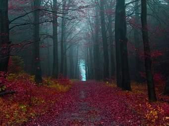 「黒い森」の紅葉 (フライブルグ郊外)