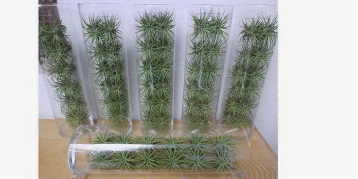 Plantas flores y velas para decorar para disfrutar - Cuadro jardin vertical ...