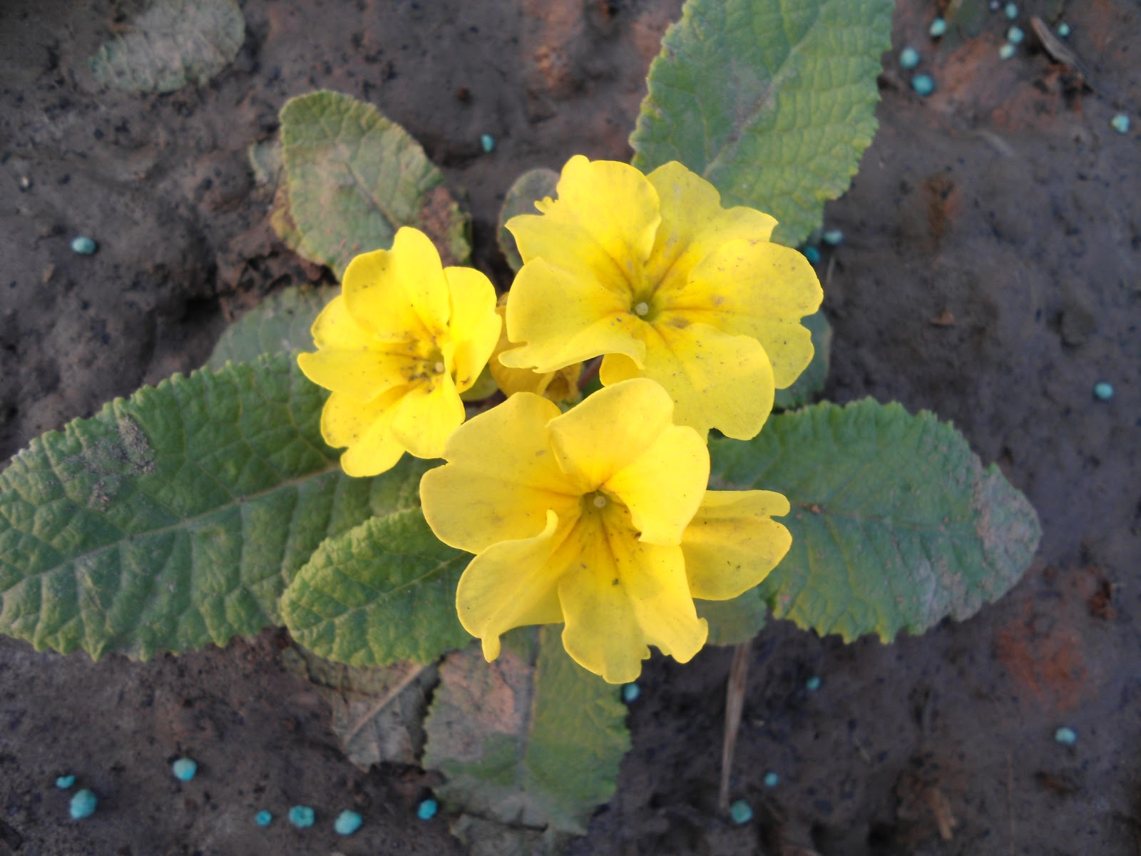 Flora hort all about horticulture floriculture and landscaping what izmirmasajfo