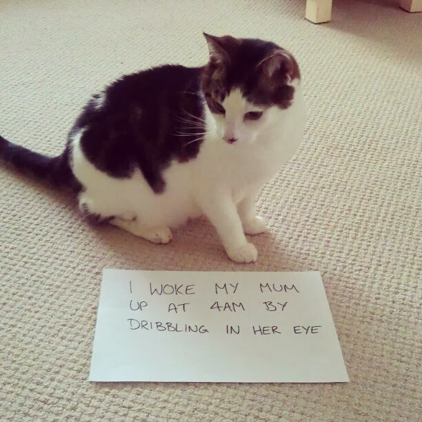 pet shaming pics