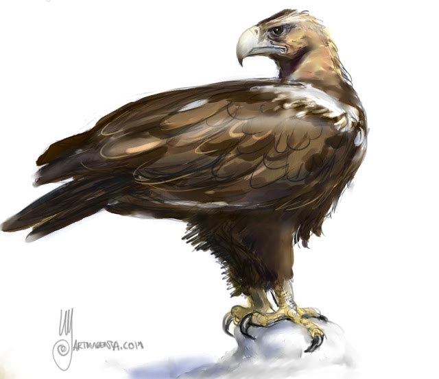 Spanish imperial eagle a bird painting by Artmagenta