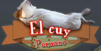 El Cuy Peruano l Crianza, Comercialización y Exportación