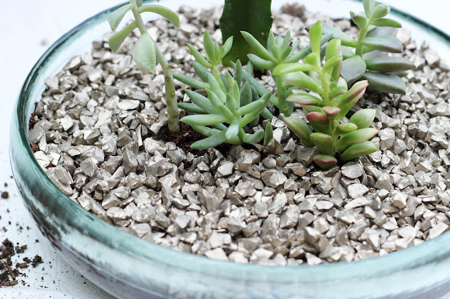 diy succulent garden tutorial in 5 steps