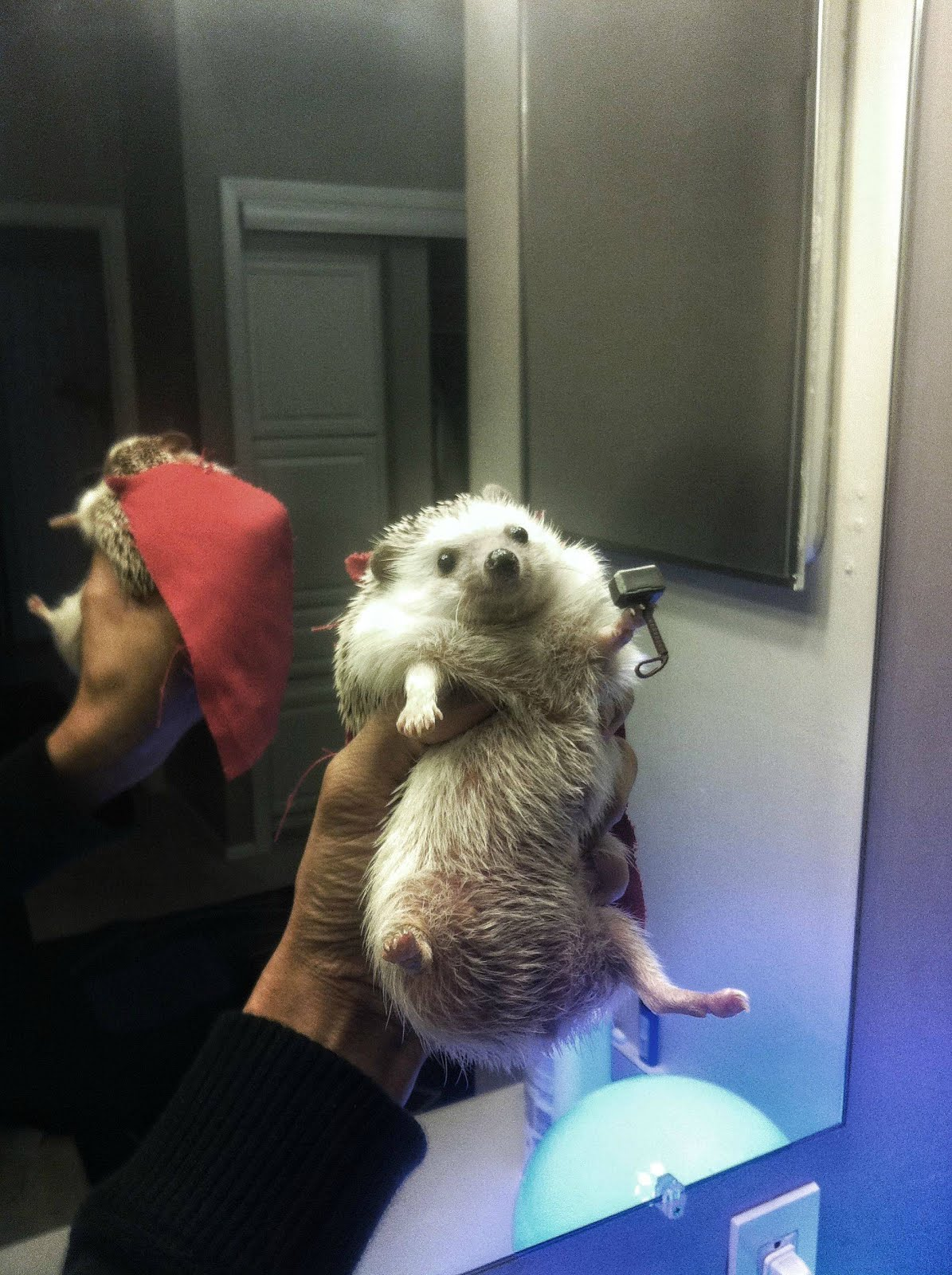 Hedgehog dressed as Thor, cute hedgehog costume, funny hedgehogs