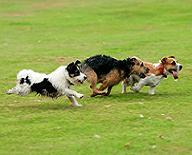 inglés para niños dogs running