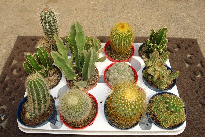 Miniplants guatemala for Utilisima jardineria