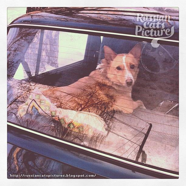 Just Instadogs Dog 09