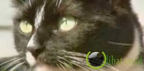 Seekor kucing yang menyelamatkan majikannya dari perampok