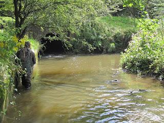 Progressing upstream with my new tanago rod