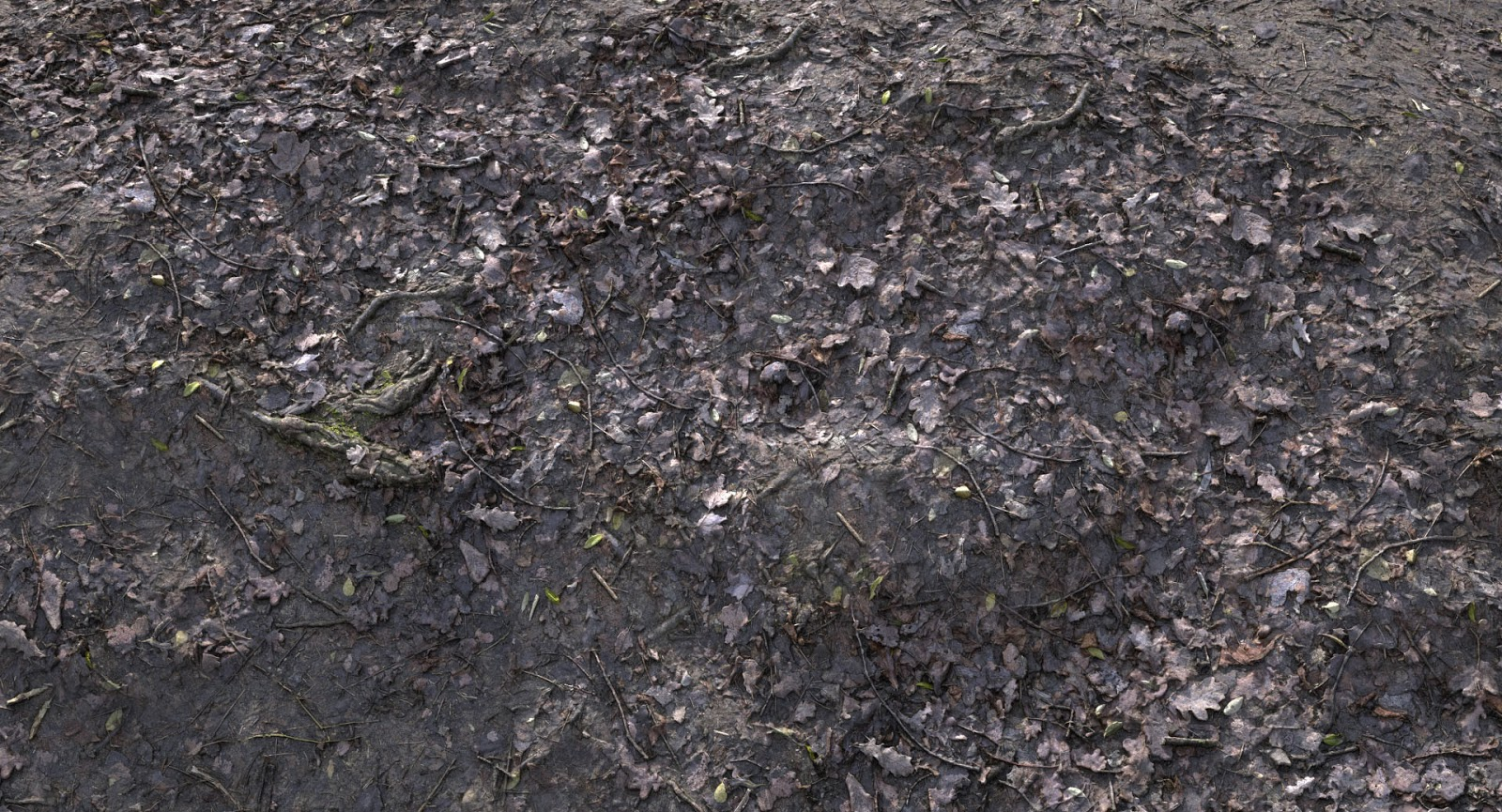 Dark Forest Floor | www.imgkid.com - The Image Kid Has It! Dark Forest Floor Texture