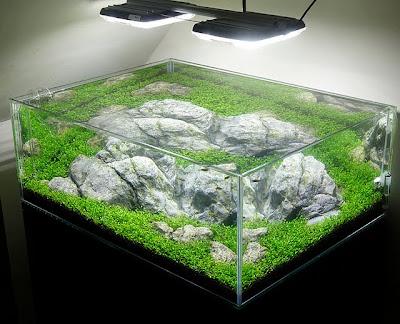 Pencahayaan Aquarium