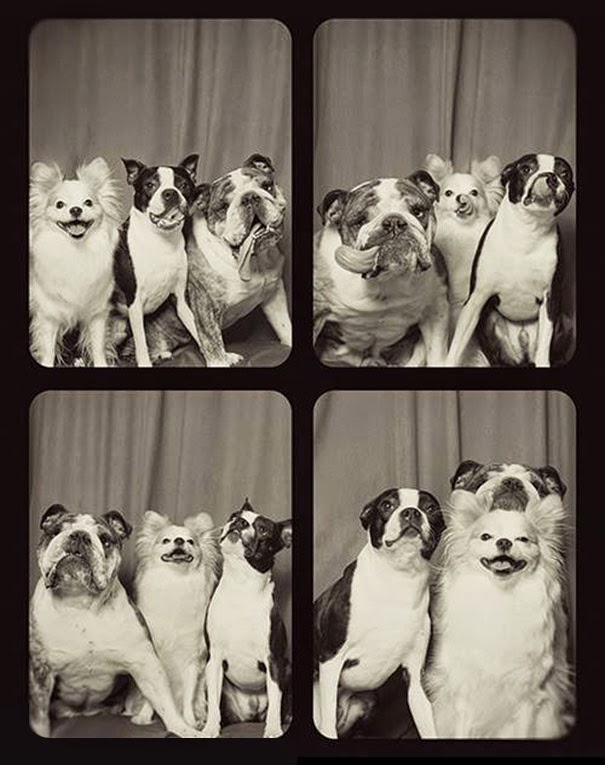 A Woman Put Dogs In A Photo Booth. What Happened Next Is The Cutest Thing Ever!