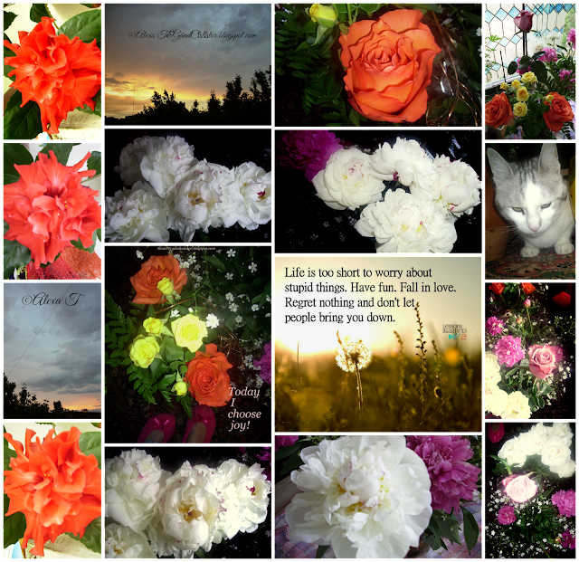 A mix of old and new unedited images, various blooms from different days of Spring...from this year and last year... Blossoms just like the Hibiscus red roses for this year and orange, yellow roses and white peonies with bride's white blooms from last year...