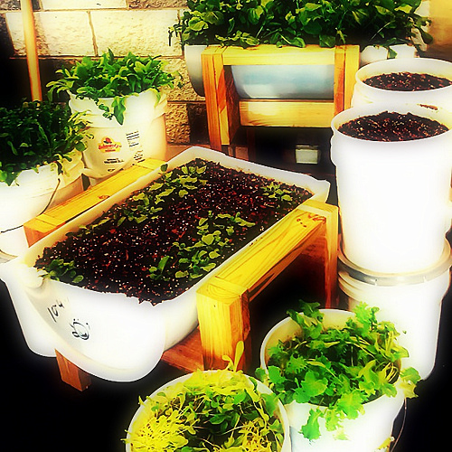 Bucket outlet a 5 gallon bucket garden for Gardening 5 gallon bucket