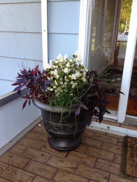 New Flower Pot Arrangement