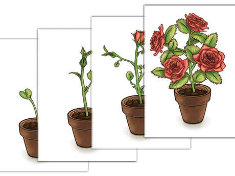 NAMC Montessori sequencing activity printable rose cards