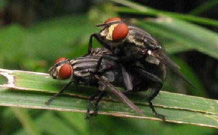 Cara Mengusir Lalat Dengan Mudah