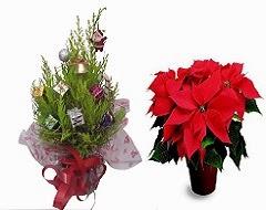Rgalar plantas y flores