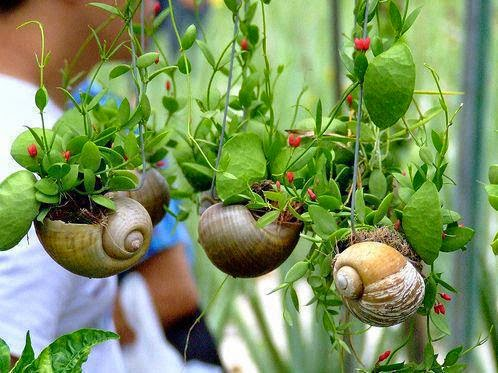 Tip menyelenggara tanaman gantung