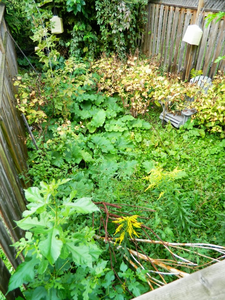 Toronto Leslieville backyard garden cleanup before Paul Jung Gardening Services