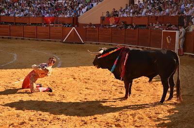 Imagen de Archivo perteneciente al festejo taurino de la corrida de la virgen, desplante del diestro de rodillas y de espaldas al toro