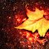 ¿Qué tiene el otoño?