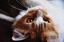 Warrior-Ferretcloud-she-cat