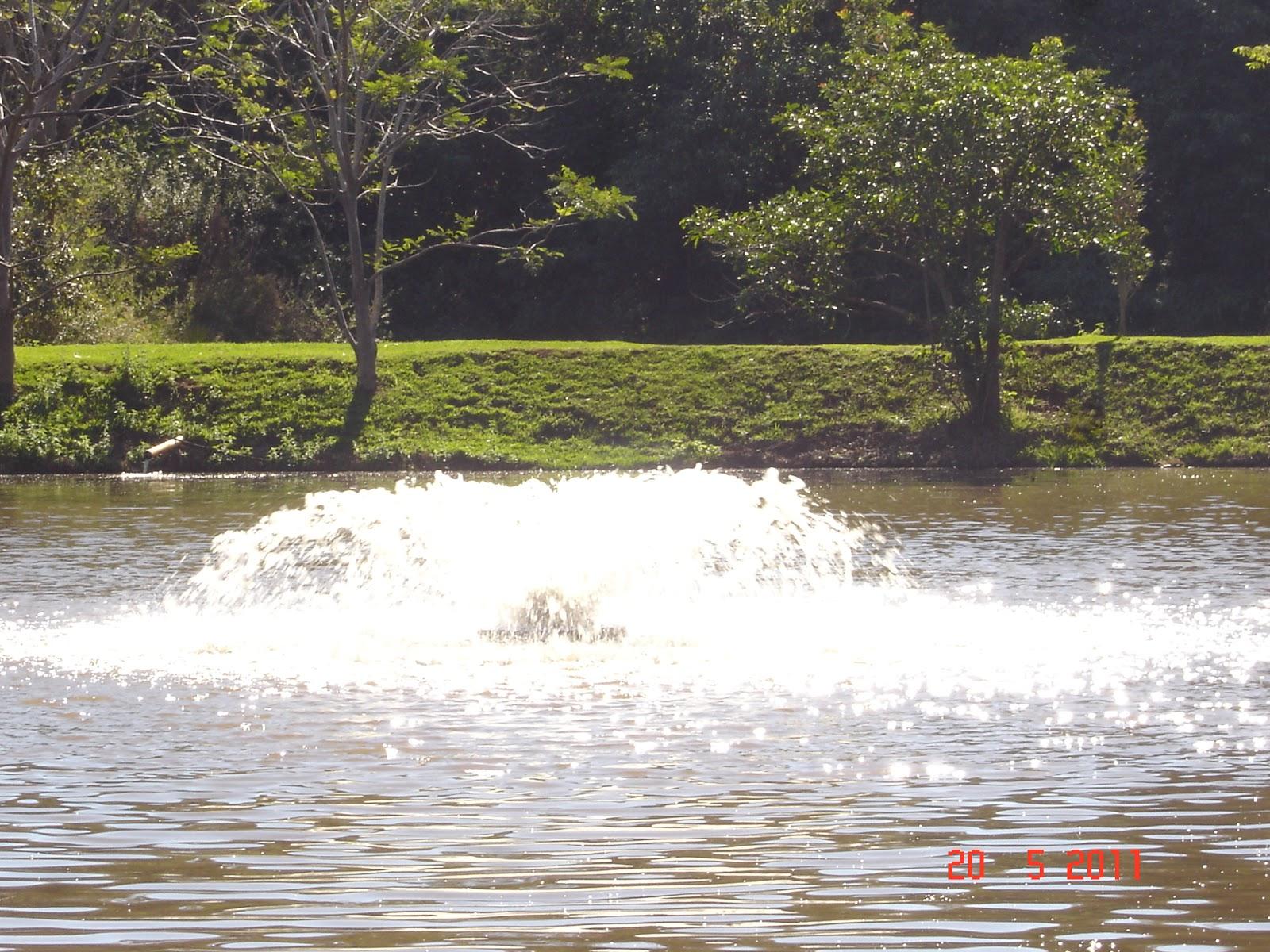 Cria peixe tilapicultura limnologia para a cria o de peixes for Construccion de estanques para piscicultura
