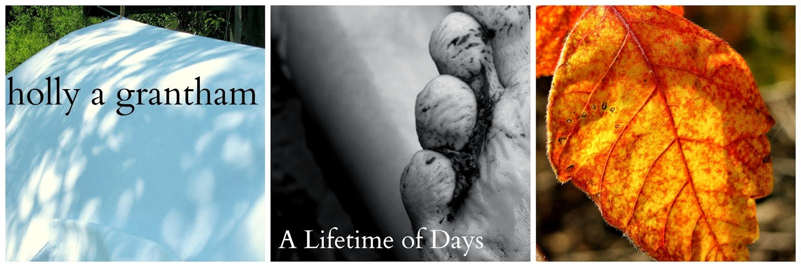 A Lifetime of Days