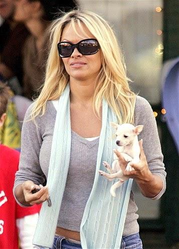 fotos de celebridades con sus perros