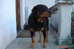 Ugo Rottweiler