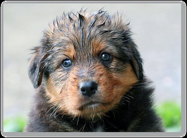 Articol despre igiena cainilor