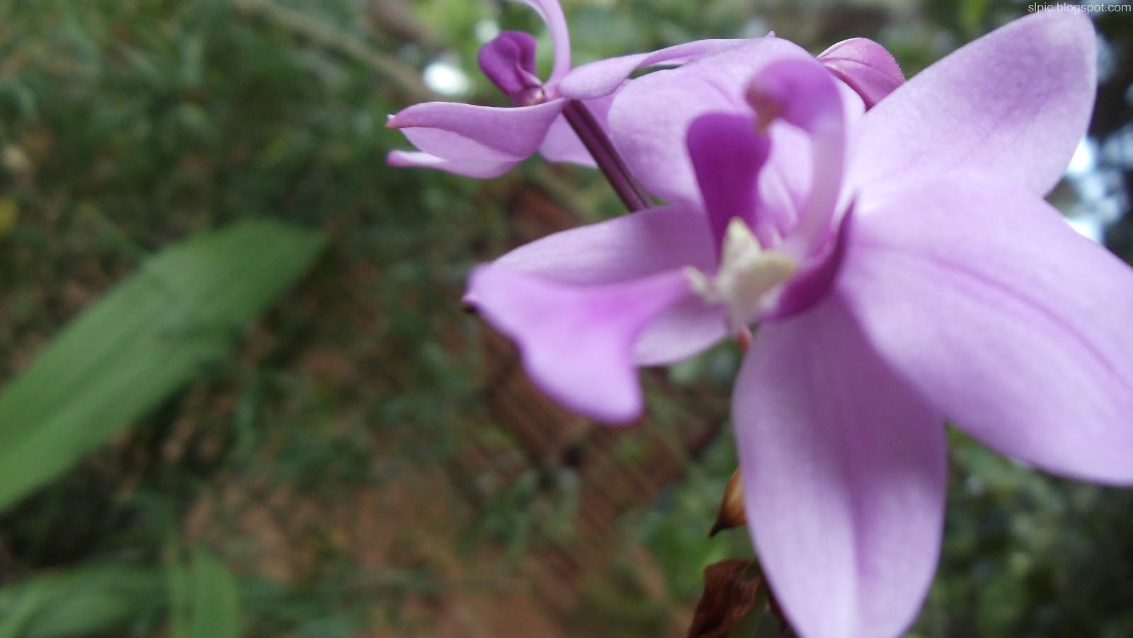http://2.bp.blogspot.com/-j6QP441PUUk/UBImXOzT-9I/AAAAAAAAKj4/EjL8zVJ6v04/s1600/Srilanka+Various+Flowers+And+Nature++(10).JPG