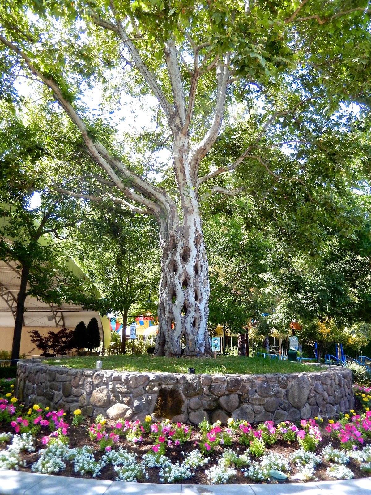 Thrillography gilroy gardens my bodacious ace coaster for Gilroy garden trees