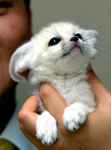 Possible here are some cute tiny animals for you cute baby animals